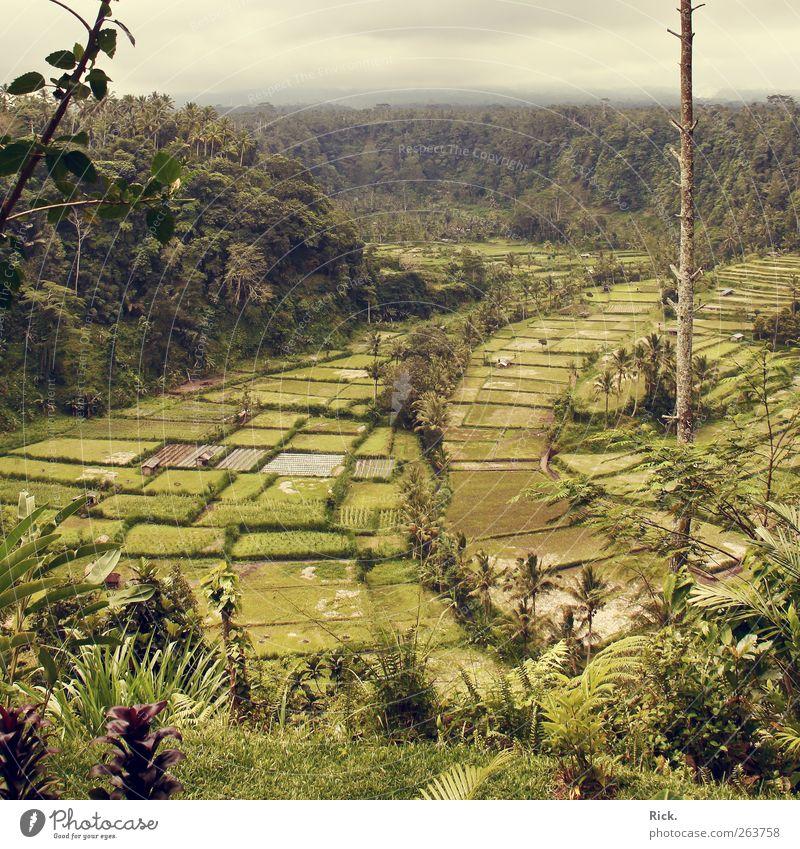 .Balis Reisfelder Natur Wasser grün Ferien & Urlaub & Reisen Pflanze Wolken Ferne Umwelt Landschaft Luft Feld Nebel Ausflug Abenteuer Tourismus Urelemente