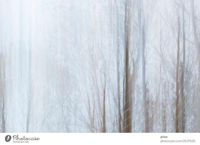 Bäume Umwelt Natur Landschaft Pflanze Himmel Herbst Winter Wetter schlechtes Wetter Nebel Baum Sträucher Wald ästhetisch hell natürlich trist trocken blau braun