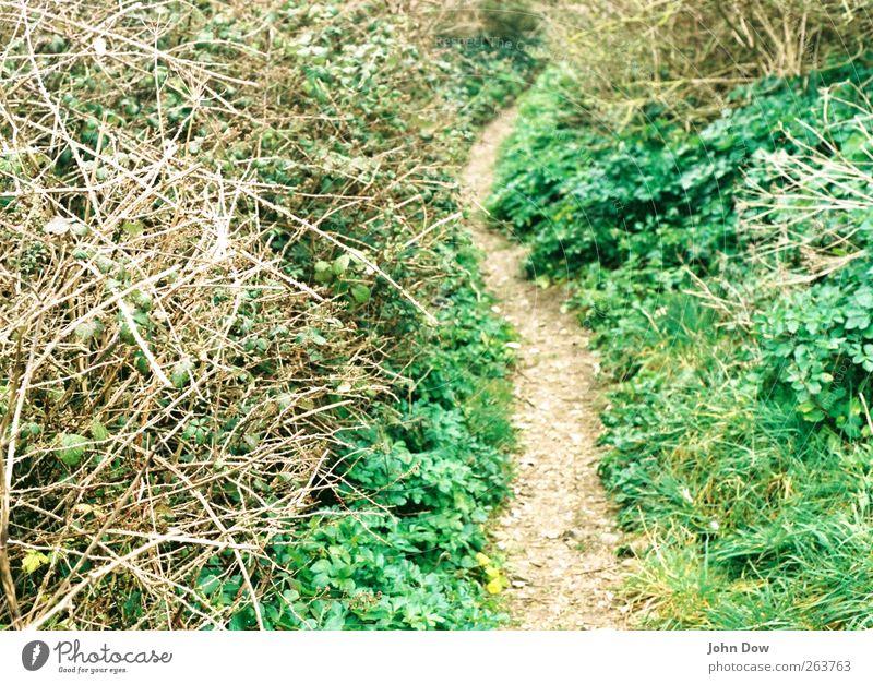 Trampelpfad Umwelt Natur Gras Sträucher Wege & Pfade Fußweg eng Schlangenlinie ländlich Schleichweg verwegen Hinterwäldler urwüchsig verirrt Unbewohnt