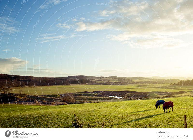 Frühlingsgefühle Umwelt Natur Urelemente Erde Himmel Wolken Sommer Klima Schönes Wetter Gras Wiese Feld Hügel wild blau grün weiß Ferne Unendlichkeit Freiheit