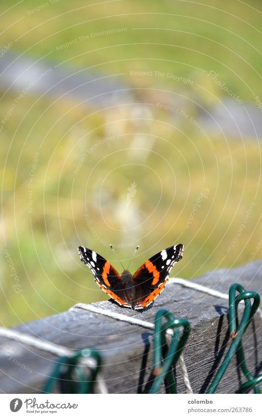 Sonnengruß Natur Ferien & Urlaub & Reisen Pflanze Sommer Sonne ruhig Tier Berge u. Gebirge Leben Frühling Gras Gesundheit Freiheit Tourismus Luft Beginn