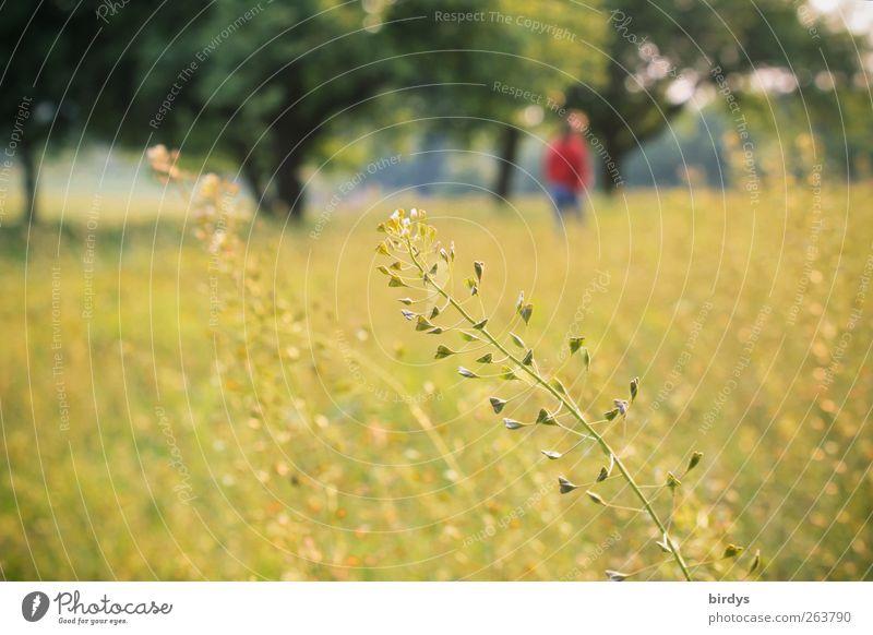 Sehnsüchte 1 Mensch Natur Frühling Sommer Schönes Wetter Pflanze Baum Wildpflanze Wiese wandern frei natürlich positiv Wärme Warmherzigkeit Romantik ruhig
