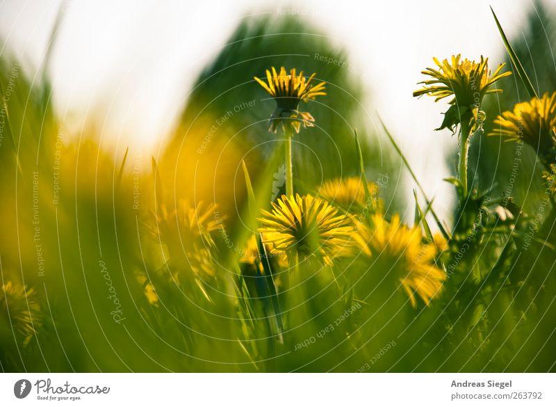 Wait a minute Natur grün Pflanze Blatt gelb Erholung Umwelt Landschaft Wiese Gras Frühling Blüte Zufriedenheit frisch ästhetisch Wachstum