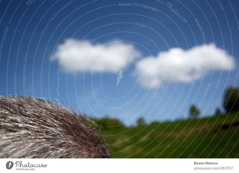 Die Gedanken sind frei Himmel blau weiß grün Sonne Sommer Wolken ruhig Landschaft Gefühle grau Kopf Haare & Frisuren Kopf Denken Zufriedenheit