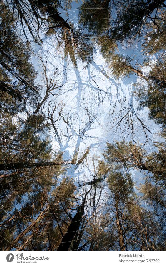 Kampf der Giganten Natur Pflanze Landschaft Wald Umwelt Kunst außergewöhnlich Stimmung Luft Kraft ästhetisch Kreativität bedrohlich einzigartig Urelemente