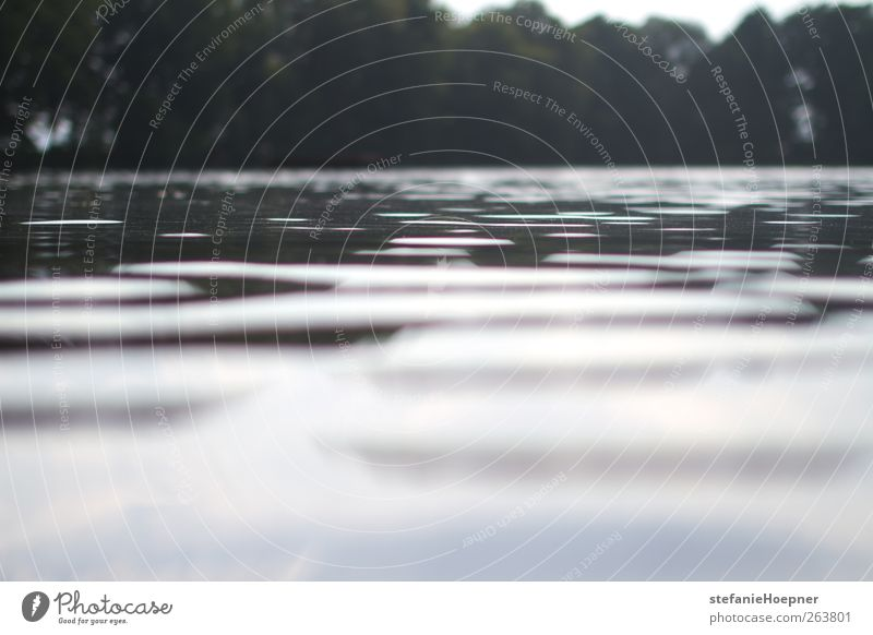 every so often Natur Wasser Sommer ruhig Landschaft See Wasseroberfläche Süßwasser