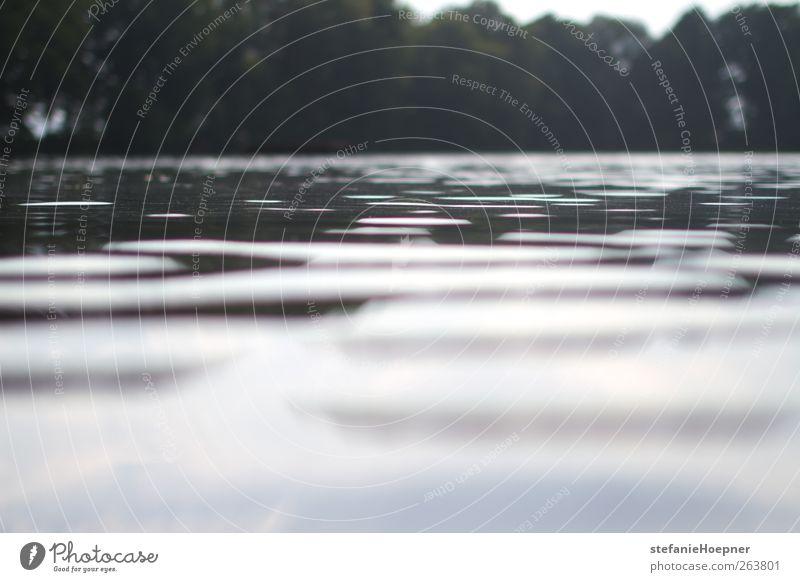 every so often Sommer Natur Wasser See ruhig Wasseroberfläche Farbfoto Außenaufnahme Textfreiraum unten Menschenleer Landschaft Süßwasser