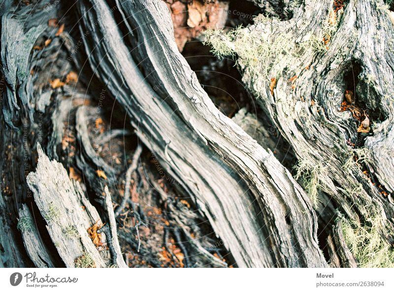 Patagonia Surfaces Natur Pflanze Baum Tier Blatt Wald Berge u. Gebirge Holz Umwelt Blüte Wiese Gras Stein Sand Erde Abenteuer