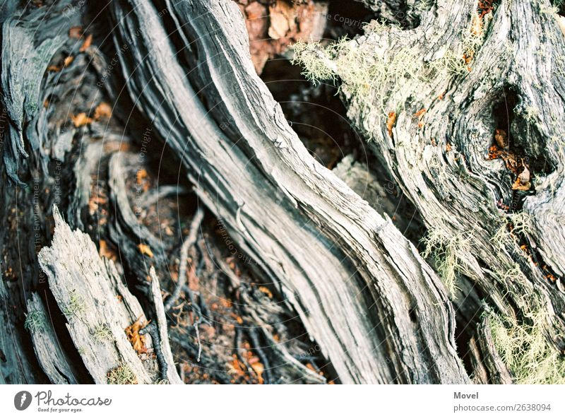 Patagonia Surfaces Umwelt Natur Pflanze Tier Urelemente Erde Sand Baum Gras Moos Blatt Blüte exotisch Wiese Wald Urwald Berge u. Gebirge Stein Holz Abenteuer
