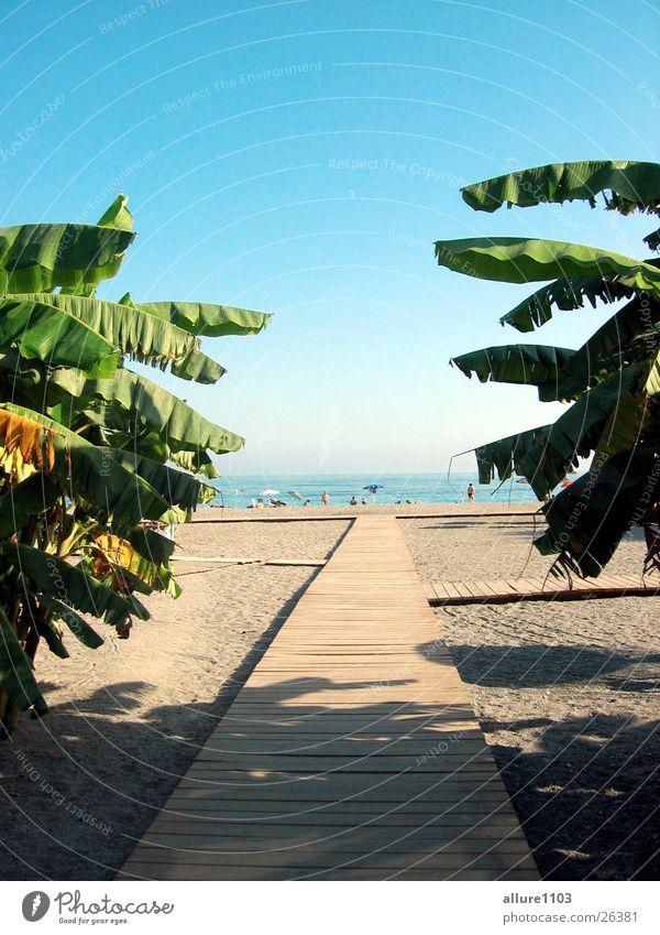 The beach Meer Strand Ferien & Urlaub & Reisen Europa Schwimmen & Baden Bucht Spanien Palme Paradies Marbella