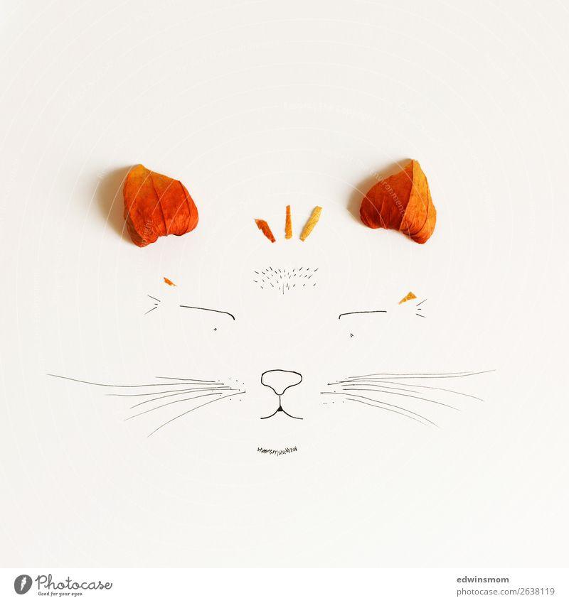 Cat Freizeit & Hobby Basteln zeichnen Natur Pflanze Tier Herbst Blüte Physalis Wildtier Katze 1 Papier Dekoration & Verzierung Lächeln träumen Fröhlichkeit