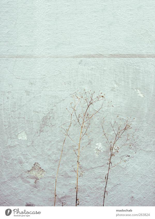 nowhere is somewhere Natur Mauer Wand Fassade ästhetisch dreckig authentisch kaputt trashig trist Stadt Willensstärke Armut Enttäuschung Farbfoto
