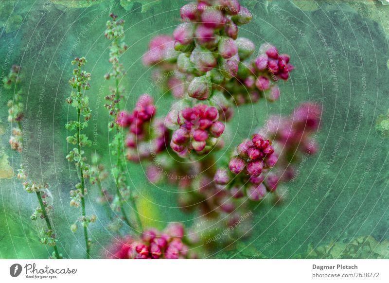 Pink trifft Grün Natur Pflanze Frühling Sommer Herbst Schönes Wetter Blume Gras Grünpflanze Wildpflanze Wiese Feld ästhetisch Duft natürlich schön mehrfarbig