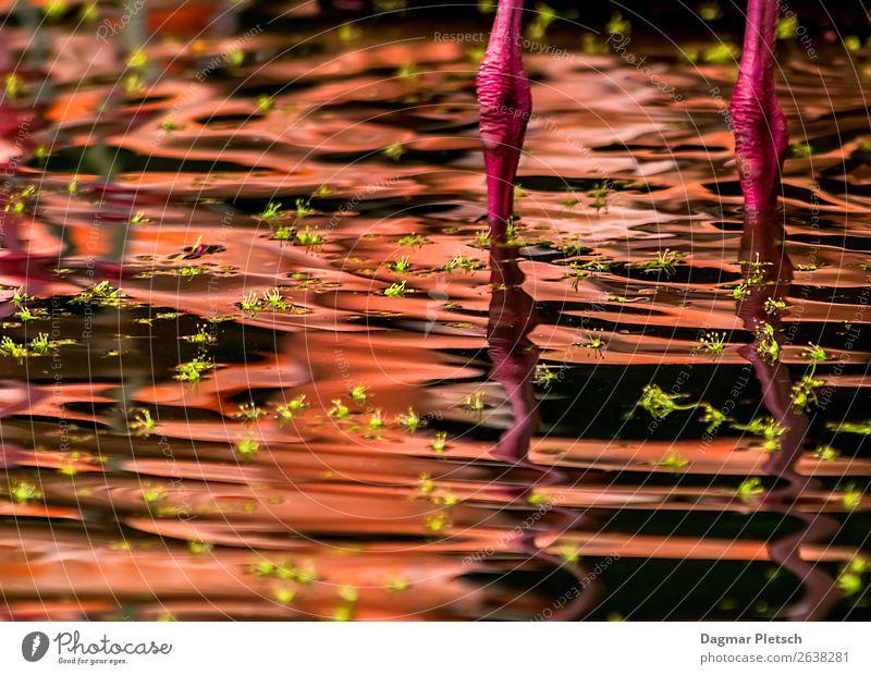 Think Pink Tier Wasser Blatt Insel See Vogel Flamingo Schwimmen & Baden außergewöhnlich grün rosa Wellen Blütenknospen Beine Farbfoto Außenaufnahme Experiment