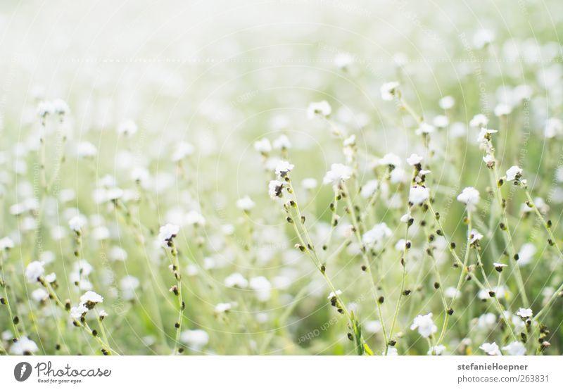 spring anticipation Natur weiß grün Pflanze Blume Erholung Umwelt Wiese Frühling Garten Blühend Lebensfreude Duft Frühlingsgefühle Wildpflanze