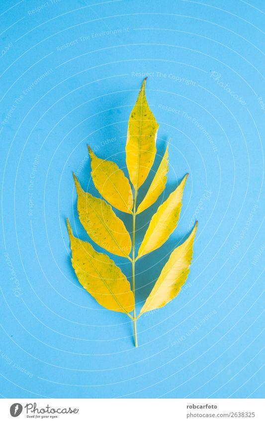 Äste mit gelben Blättern Design schön Leben Dekoration & Verzierung Natur Pflanze Herbst Baum Blatt Wald Schmetterling hell braun gold grün weiß Farbe