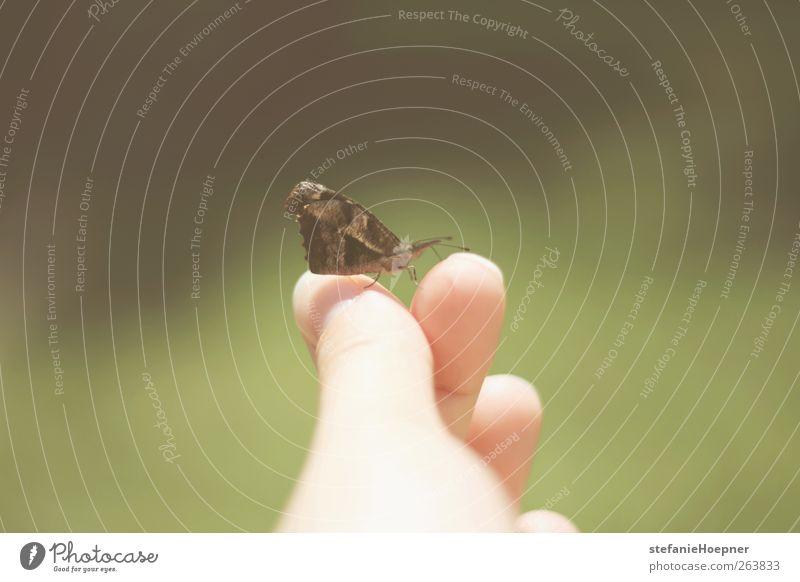 catching butterflies Natur Sommer Tier Frühling Zufriedenheit Schönes Wetter Freundlichkeit Vertrauen Schmetterling Lebensfreude Frühlingsgefühle