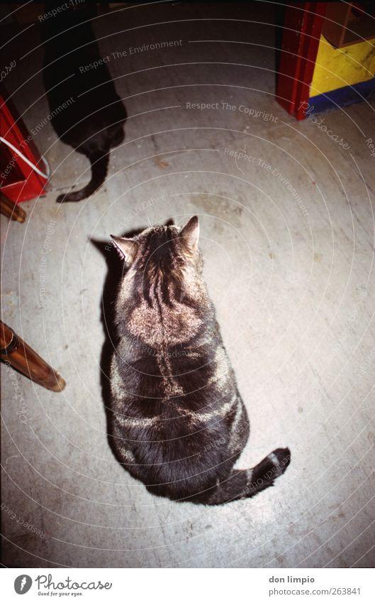 wir kommen wohl nur wieder raus, wie wir reinkamen. Katze Tier Innenarchitektur Zusammensein dreckig warten Häusliches Leben Fell Gelassenheit dick analog Haustier Tigerfellmuster