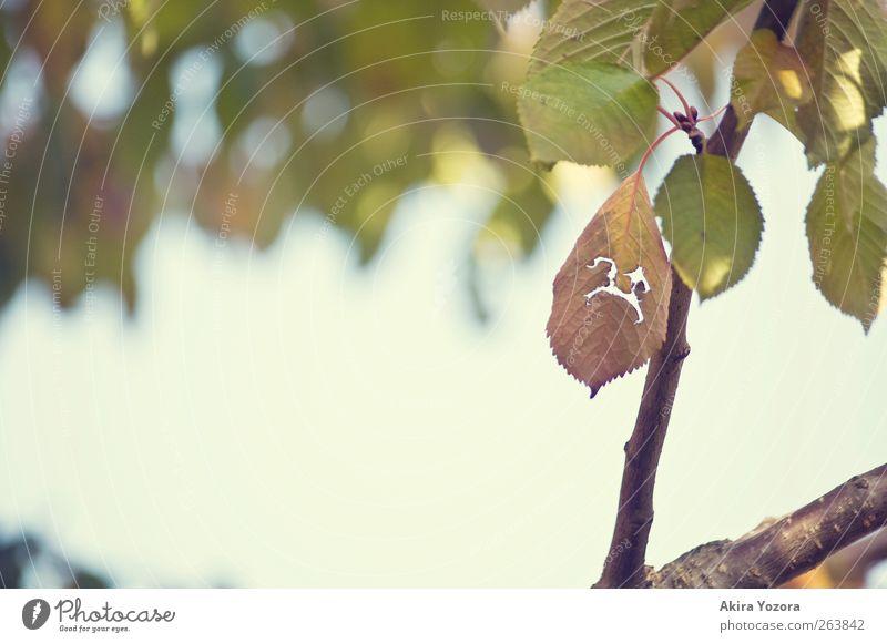 :( Natur alt blau grün Baum Sommer Blatt Herbst Garten Traurigkeit braun Zusammensein Trauer Vergänglichkeit Schönes Wetter Verfall