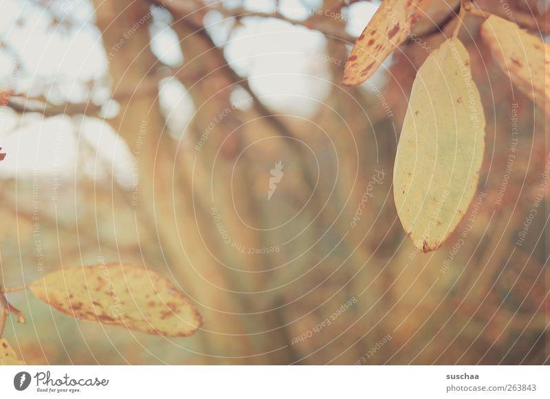 ruhetag Umwelt Natur Landschaft Herbst Klima Baum Blatt Feld Holz Idylle Wandel & Veränderung Baumstamm Ast Jahreszeiten Unschärfe Außenaufnahme Menschenleer