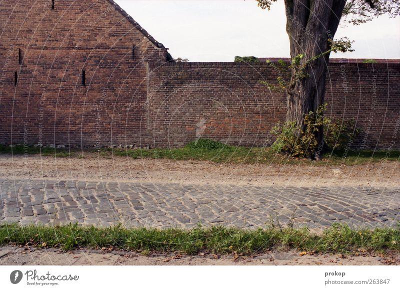 Draußen in Deutschland Umwelt Natur Pflanze Baum Gras Dorf Haus Einfamilienhaus Bauwerk Gebäude Mauer Wand Fassade Straße Wege & Pfade authentisch Klischee