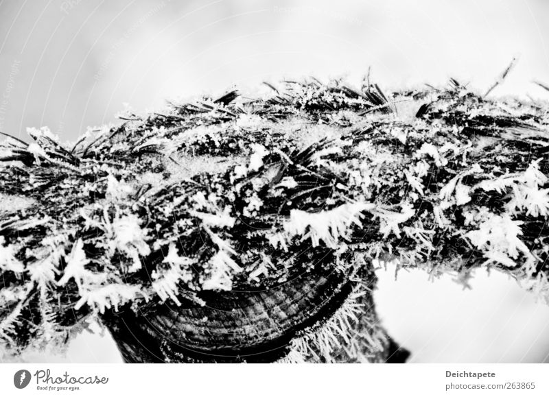Wintertau alt weiß schwarz ruhig kalt Schnee Holz Eis Seil Frost trist Schnur