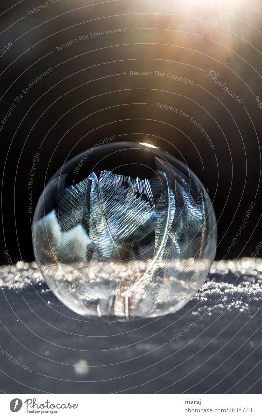 888   Verwandlung   zum Kunstwerk harmonisch Meditation Winter Eis Frost Schnee Seifenblase leuchten außergewöhnlich dunkel dünn authentisch Erfolg gigantisch