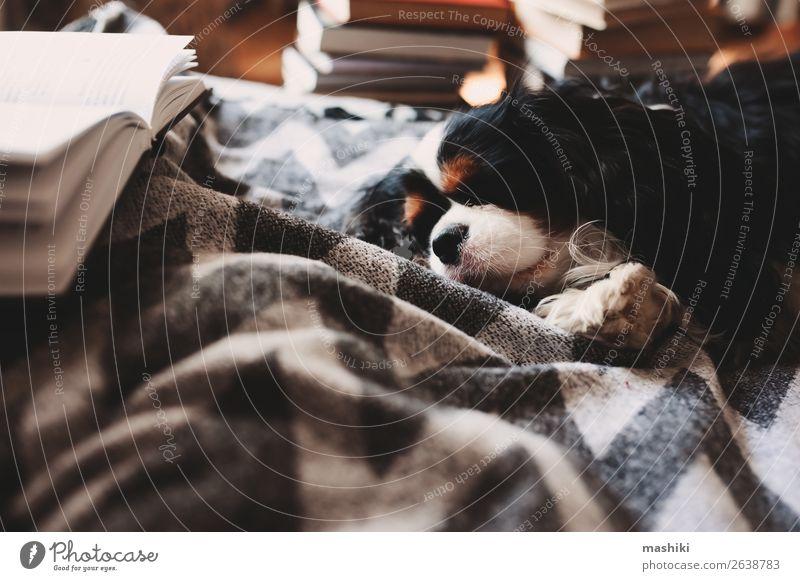 gemütliches Winterheim mit Hund im Bett auf warmer Decke Tee Lifestyle Erholung Freizeit & Hobby lesen Haus Buch Herbst Wärme Hütte Holz schlafen authentisch
