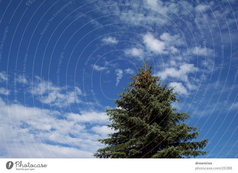 sky Baum Himmel Wolken Tanne blau