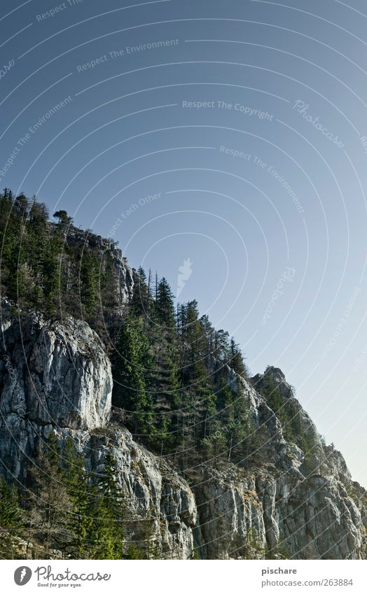 wald am fels, mit hälfte himmel Himmel Natur Wald Landschaft Berge u. Gebirge Felsen Abenteuer Schönes Wetter Wolkenloser Himmel