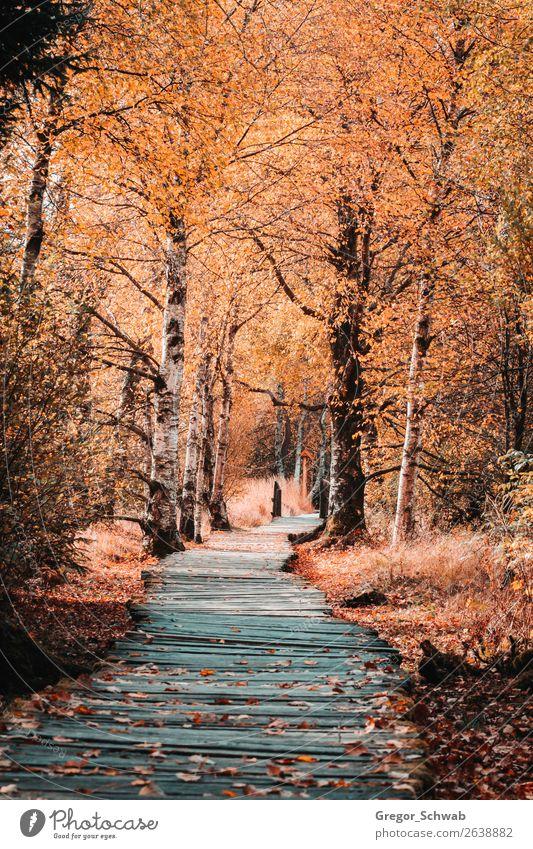 Herbstwege in der Rhön Natur Landschaft Pflanze Tier Blume Abenteuer Moor Holzweg Baum Farbfoto mehrfarbig Außenaufnahme Menschenleer Tag Licht Schatten