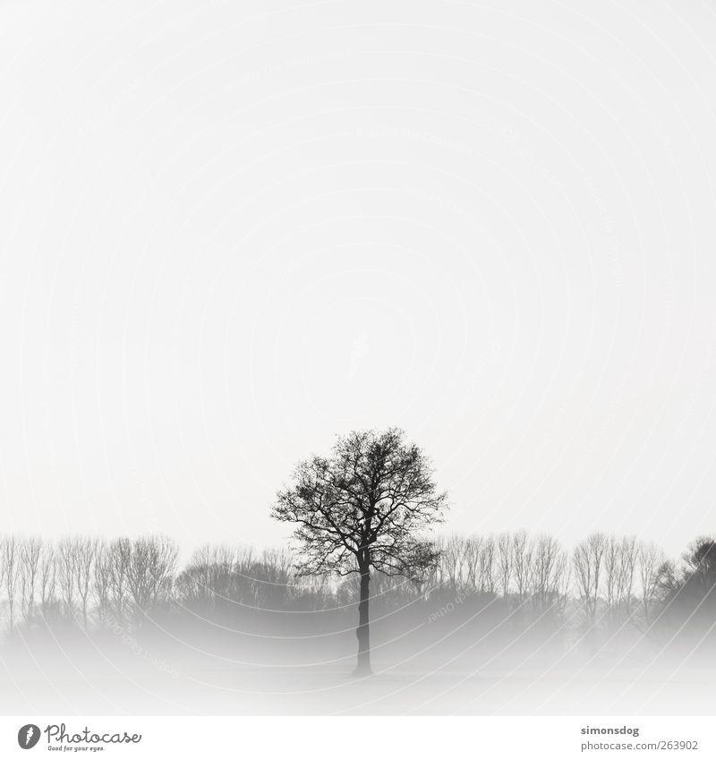 keine symmetrie! Umwelt Natur Landschaft Pflanze Winter Nebel Eis Frost Baum Wiese Wald dünn elegant hell kalt schwarz weiß Gefühle Stimmung Macht Romantik