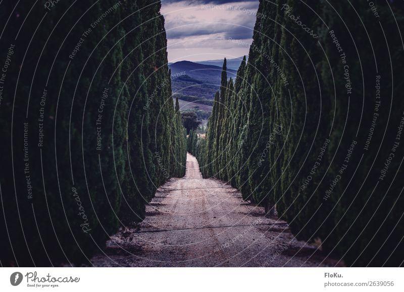 Allee mit Zypressen Ferien & Urlaub & Reisen Tourismus Umwelt Natur Landschaft Baum Grünpflanze Park Hügel Straße Wege & Pfade blau grün Stimmung Schotterstraße