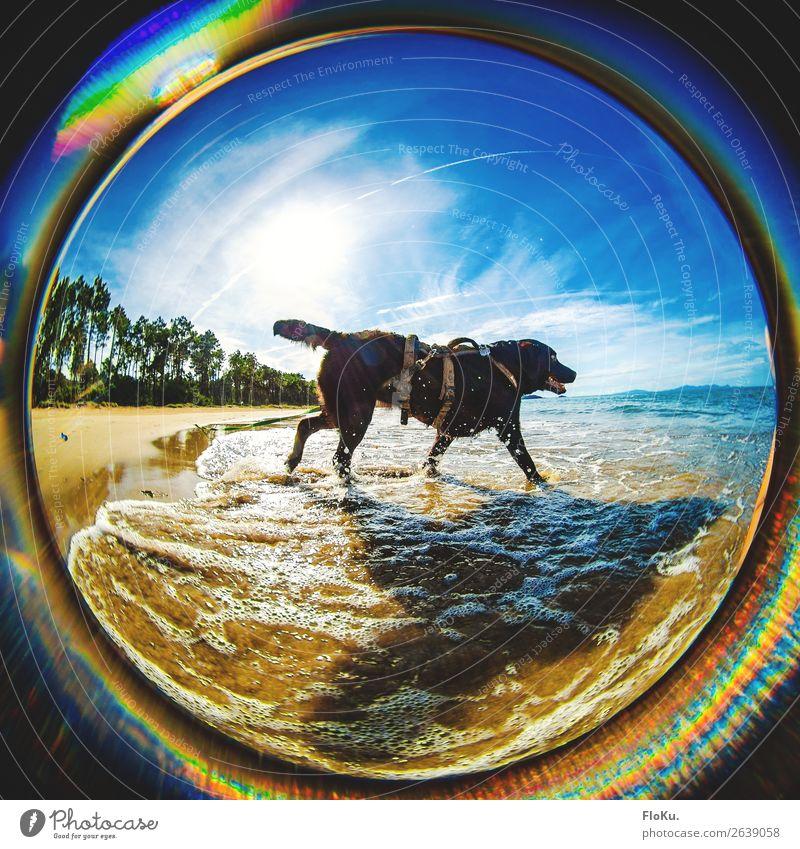 kurze Abkühlung für Lotta Ferien & Urlaub & Reisen Abenteuer Ferne Umwelt Natur Landschaft Urelemente Erde Wasser Himmel Sonne Sonnenlicht Sommer Schönes Wetter