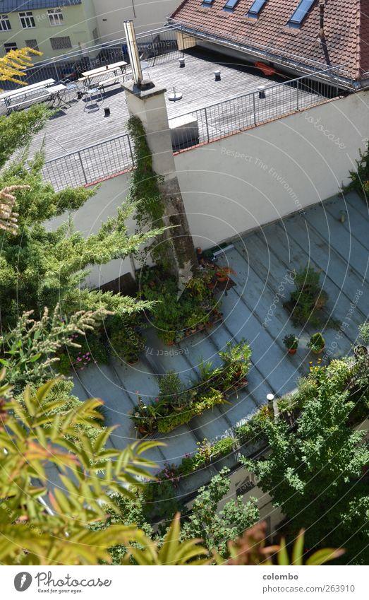 Gründach Lifestyle Sommer Häusliches Leben Haus Garten Dachterrasse Natur Schönes Wetter Pflanze Sträucher Efeu Blatt Grünpflanze Topfpflanze Stadt Hochhaus