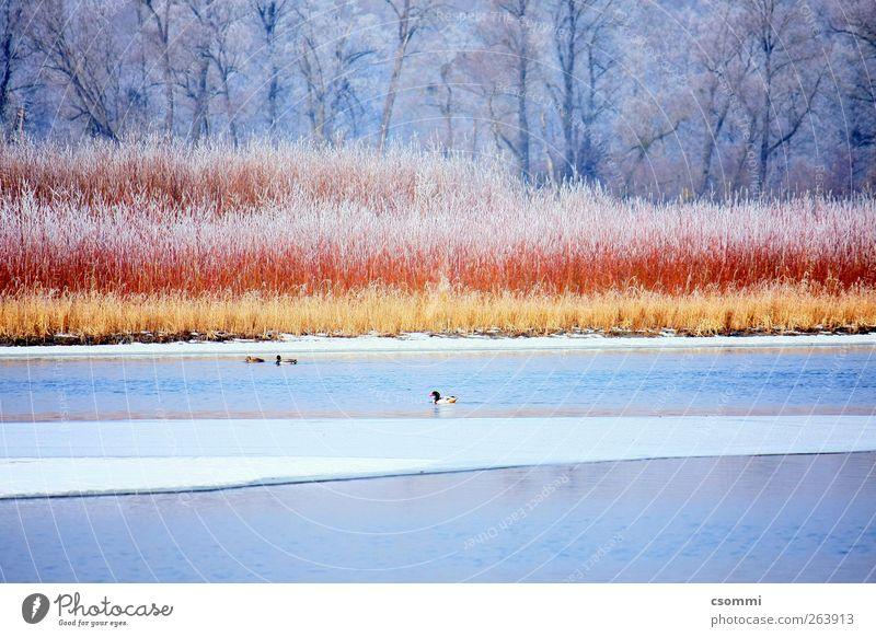 Zimt & Zucker Wasser schön Winter Einsamkeit ruhig Wald See träumen Eis Insel ästhetisch Frost Sträucher Fluss Idylle Sehnsucht
