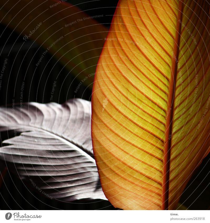 Lebenslinien #41 Pflanze Erholung Stimmung Zufriedenheit elegant ästhetisch Wandel & Veränderung Vergänglichkeit Konzentration parallel Partnerschaft exotisch