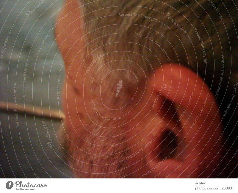 Bart Mann Gesicht Kopf Ohr Bart Wange Oberlippenbart grauhaarig
