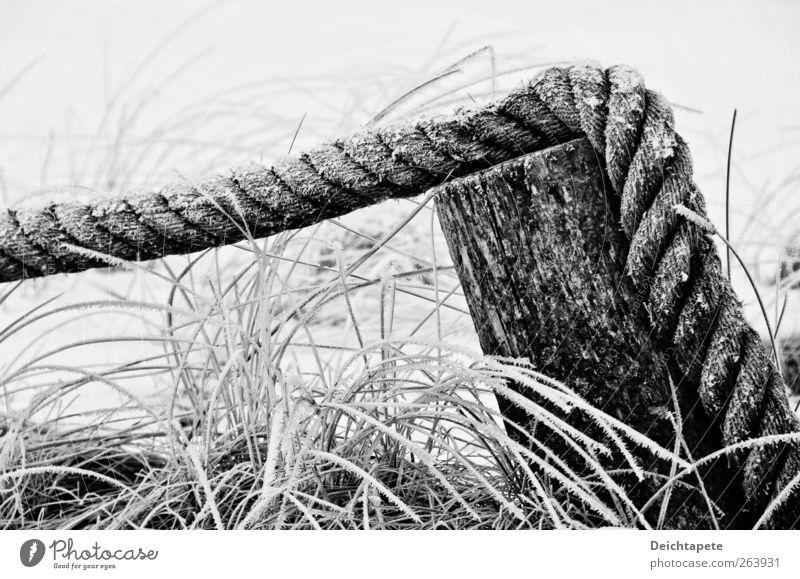 Kaltes Still Natur Wasser Winter Eis Frost Gras Küste Nordsee Ostsee Seil Holz Schnur fest kalt schwarz weiß ruhig standhaft Stimmung Schwarzweißfoto
