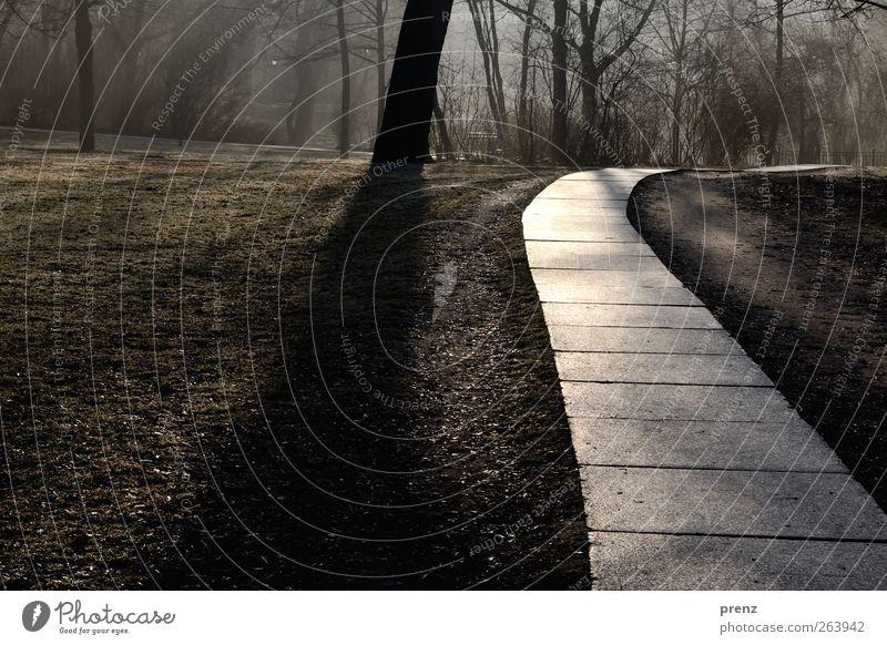 Ich gehe meinen Weg Natur Baum Umwelt Wege & Pfade grau Park braun Bodenplatten Schattenspiel