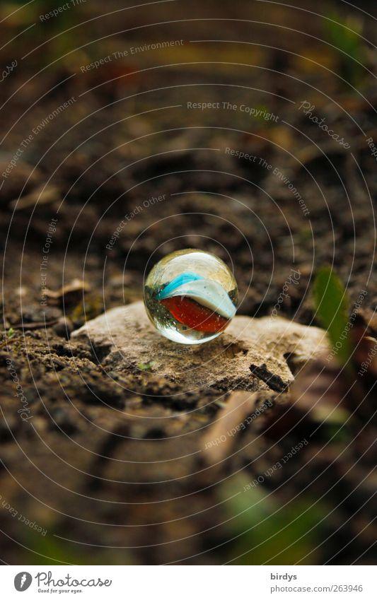 Pelle`s Murmel Erde Pflanze Stein ästhetisch authentisch rund Glasmurmel Kinderspiel deutlich Fundstück Glaskugel Kugel Farbfoto Außenaufnahme Textfreiraum oben