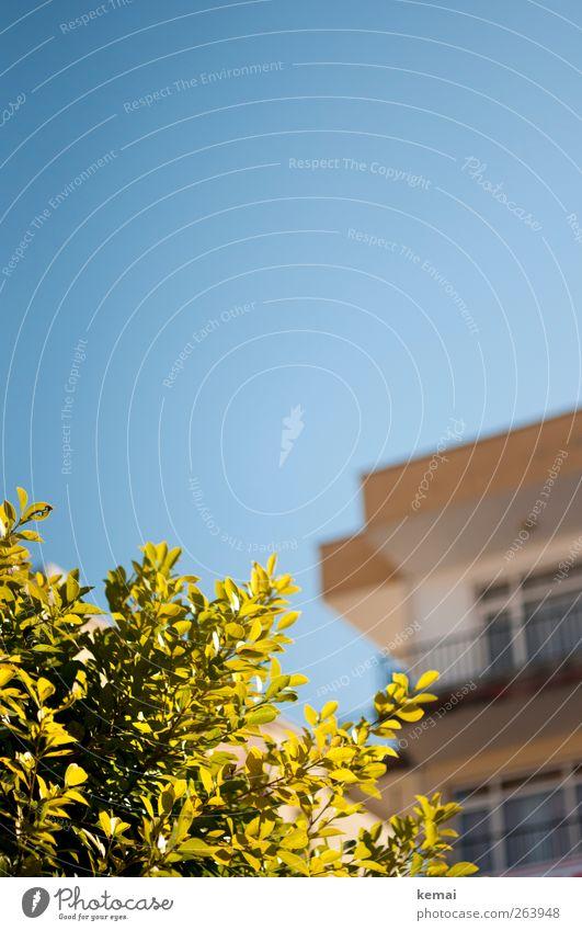 Urlaubslicht Umwelt Natur Pflanze Wolkenloser Himmel Frühling Sommer Schönes Wetter Sträucher Blatt Haus Balkon leuchten Wachstum hell blau grün Farbfoto