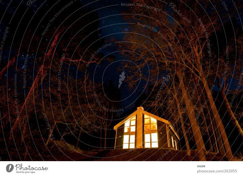 Hex-Hex Natur Ferien & Urlaub & Reisen Baum Landschaft Haus dunkel Wald Umwelt klein Feste & Feiern leuchten fantastisch Stern Abenteuer Urelemente Jahreszeiten
