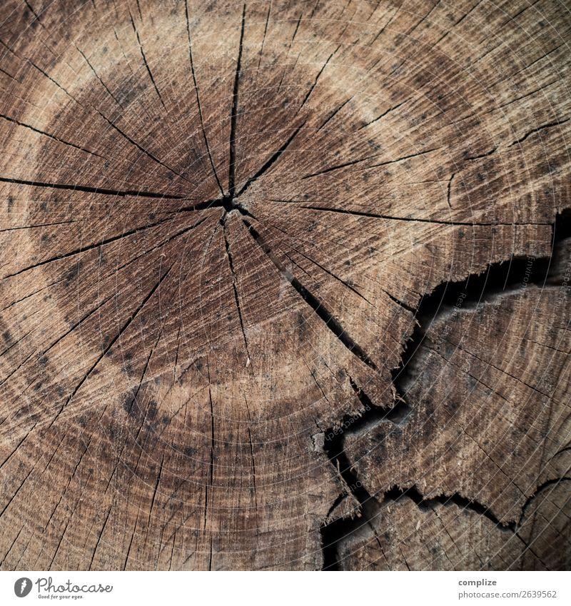 Baum Jahresringe, gebrochen Gesundheit Gesundheitswesen Alternativmedizin Leben Holz Zukunft Senior Lebenslauf Schicksal alternativ Ring Hintergrundbild