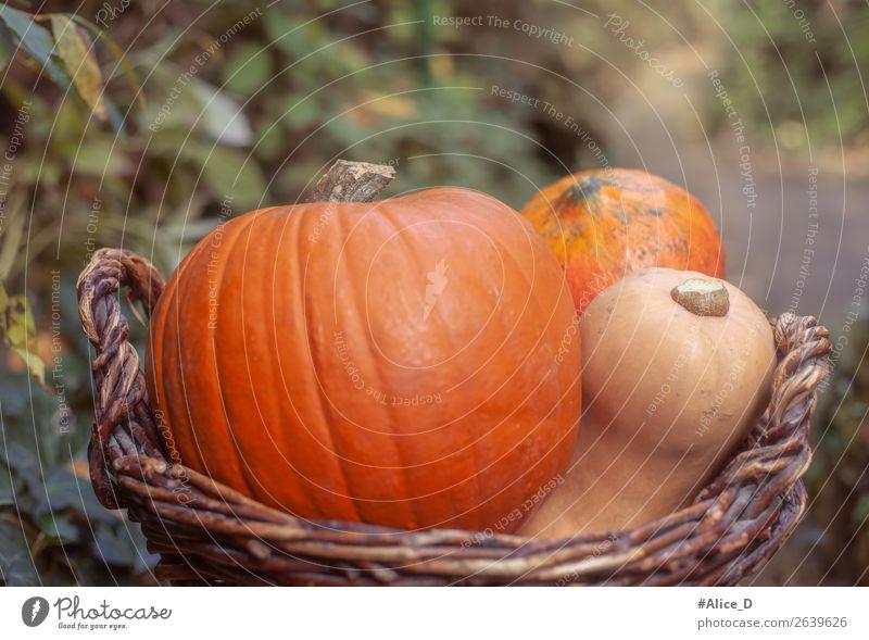 Kürbiskorb vor Naturhintegrund Lebensmittel Gemüse Ernährung Bioprodukte Vegetarische Ernährung Korb Gesunde Ernährung Erntedankfest Halloween Herbst