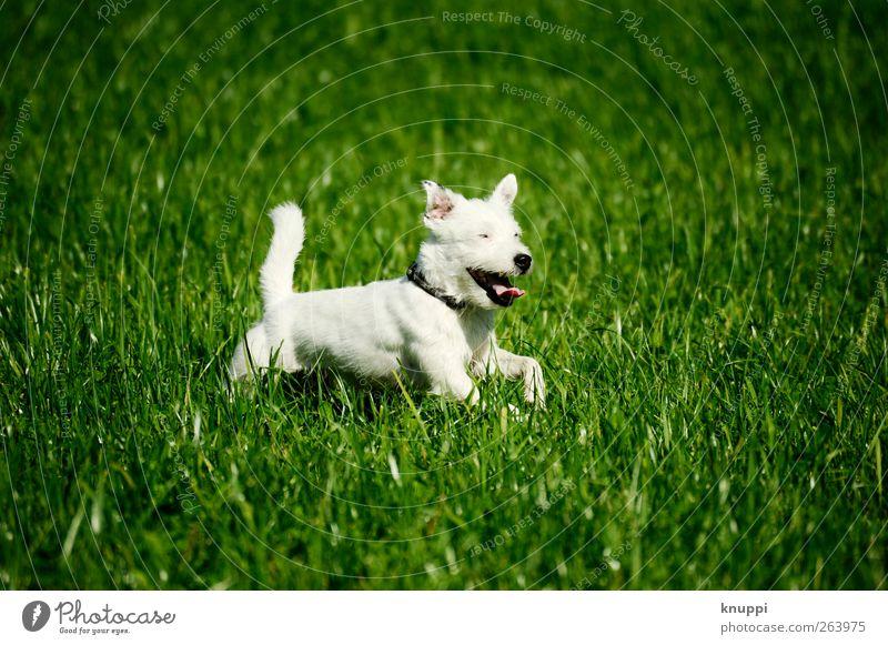 Frostie III Natur Sonnenlicht Sommer Schönes Wetter Pflanze Gras Wiese Feld Tier Haustier Hund 1 Tierjunges Bewegung rennen sportlich frech Freundlichkeit