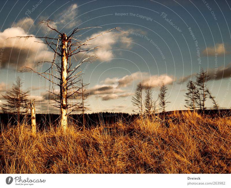 Triste Trostlosigkeit Natur blau Baum Umwelt Landschaft braun wild Klima Europa Sträucher trist Hügel trocken Dürre stachelig Schottland