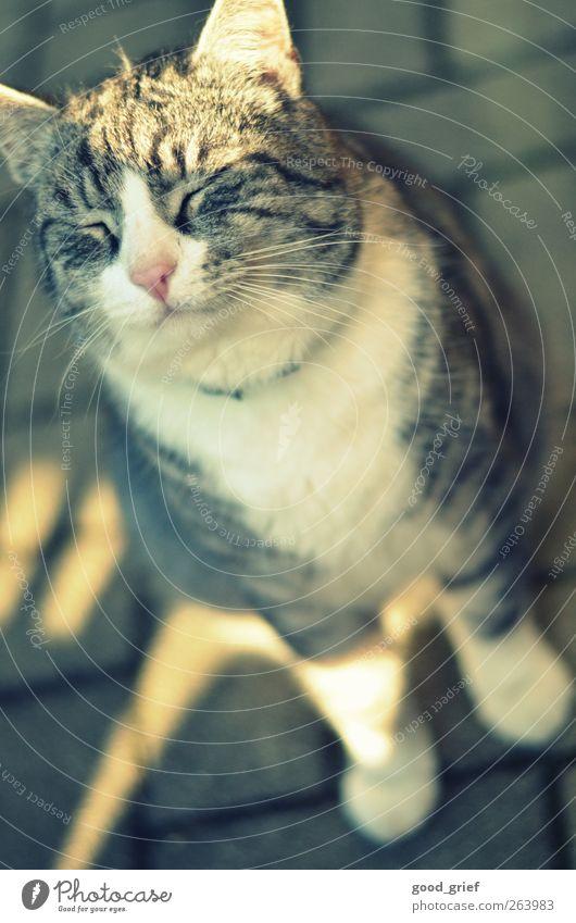 endlich! Katze Natur schön Sommer Tier Liebe Herbst Zufriedenheit Fröhlichkeit Coolness Warmherzigkeit Romantik Bart genießen Lebensfreude Verliebtheit