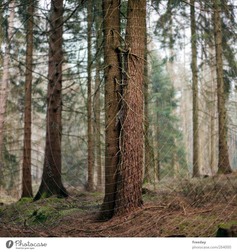 never alone Umwelt Natur Frühling Herbst Baum Sträucher Moos Blatt Grünpflanze Nutzpflanze Park Wiese Wald Holz berühren stehen braun Kraft Macht Leidenschaft