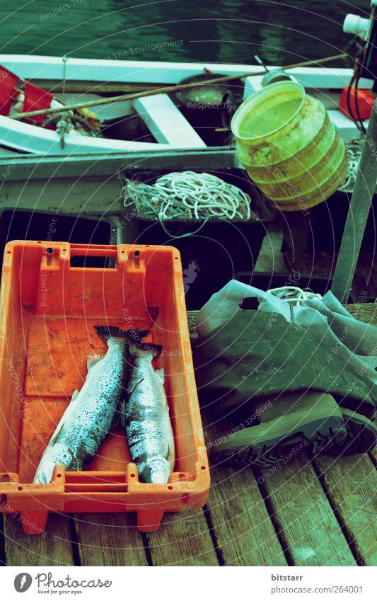 Schmaler Fang Lebensmittel Arbeitsplatz Wasser Küste Ostsee See Schifffahrt Fischerboot Hafen Gummistiefel Tier Totes Tier Arbeit & Erwerbstätigkeit fangen